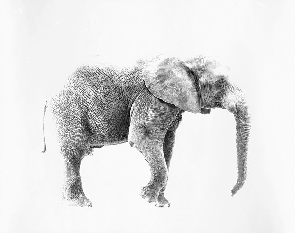 Elephant, Industrial Alliance